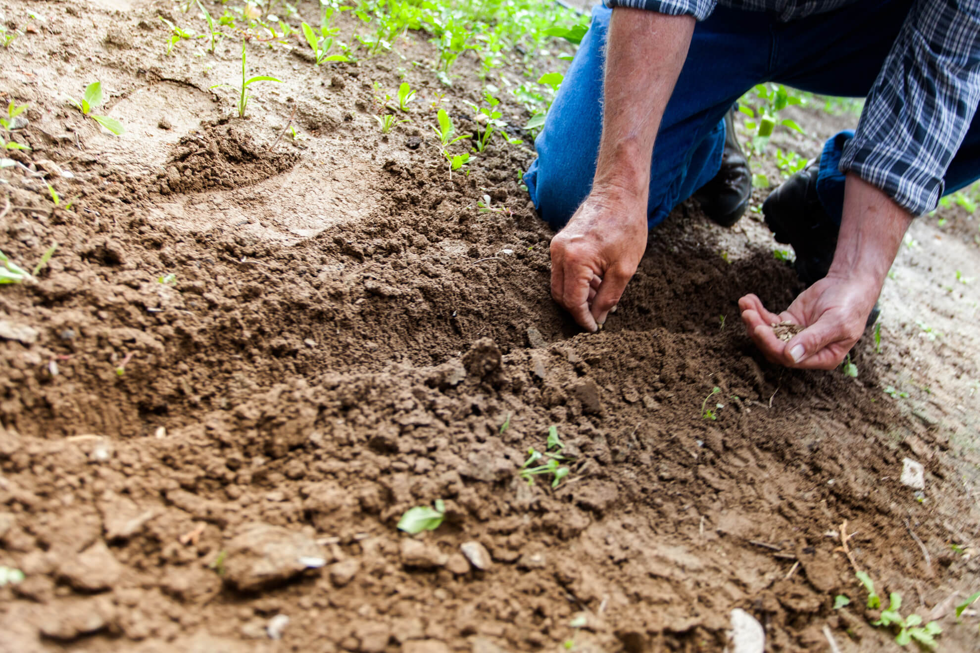 Come Diventare Perito Agrario con la Guida di Grandi Scuole